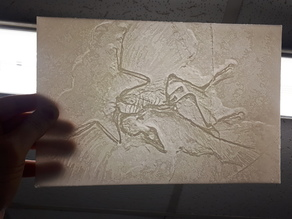 Microraptor Lithophane - arqueopterix