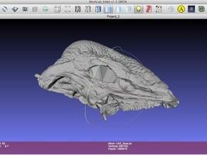 Stegoceras validum (skull)