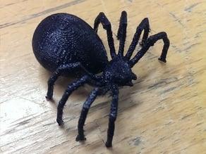 Steven the Spider