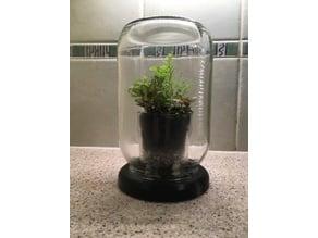 Olive Jar Terrarium