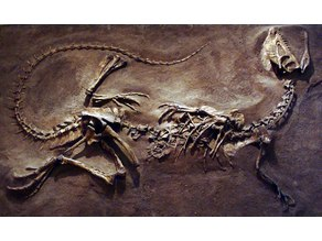 Dilophosaurus Dinosaur Fossil