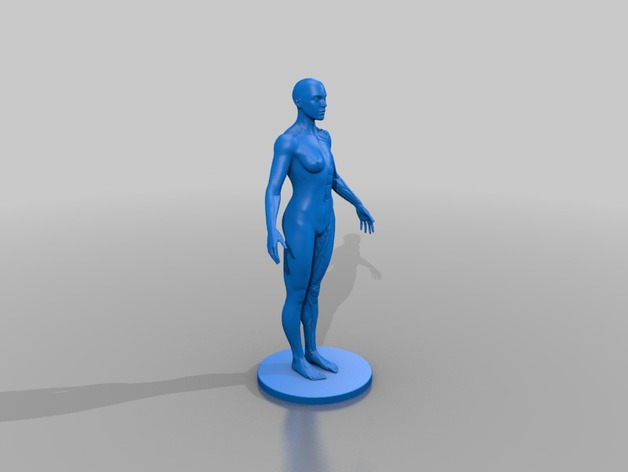 Female Anatomy Reference By Frazus Thingiverse