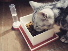 Cat Bowl with auto filled anti bug moat + Bottle