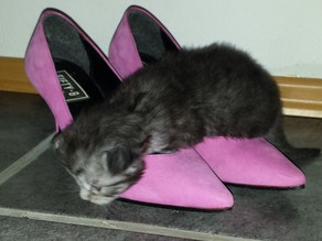 Kitten Playground