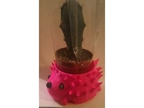 Hedgehog cactus holder
