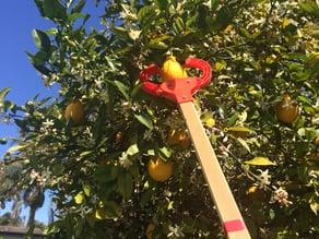 fruit-picking