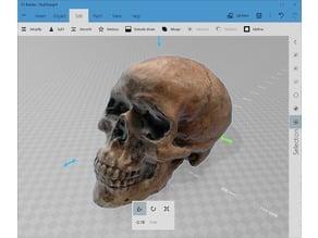 Decent Human Skull