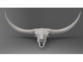 Bison latifrons skull