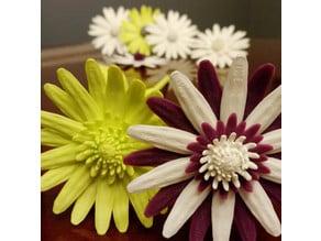 Daisy - Flat flower