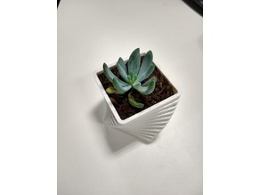 Succulent Pot - Steps
