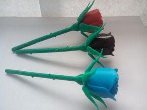 Rose with Stem & Thorns & Sepals & Hip (stem_cut)