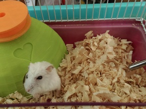 Hamster Condo