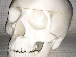 Bigger Bowl Skull