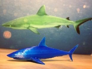 Reef Shark from Toucan Virtual Museum