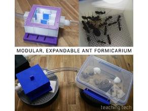 Modular, expandable ant formicarium