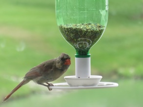 Big Bird Bottle Feeder