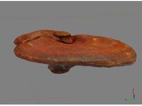 Ganoderma lucidum - Reishi / Lingzhi Mushroom 3D Scan