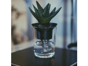 Senkelpflanze // Self watering planter.