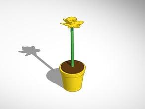 daffodil in yellow pot