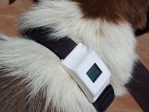 Fitbit Zip box for dog collar