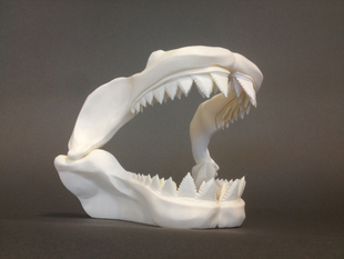 Great White Skull