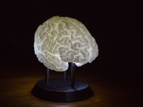 LED-Lit Brain