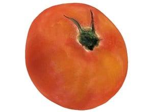 The Tomato-2