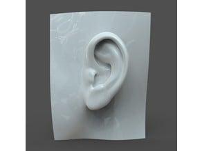 Realistic woman ear model F1P1D0V1ear