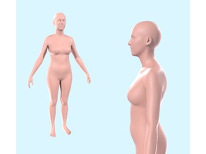 Stamat - Almost Average Female Body - Scale 1:2