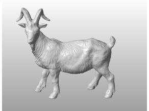 Goat scan