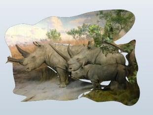 AMNH African Rhinos