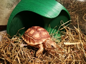 Tortoise Shelter (with pole)