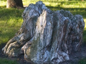 A Petrified Tree Stump