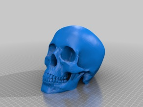 Human Skull Solid No Supports Needed Renforced Mandibl/teeth