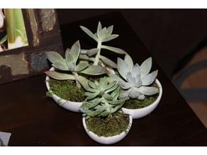 Succulent Tri-Bowl