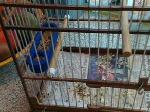 food bowl birds