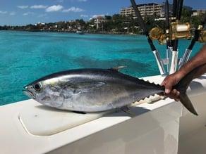 Cedar Plug Fishing Lure (saltwater)