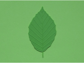 Beech tree leaf