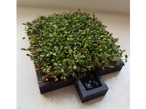 Cress farm (growing sprouts)