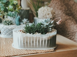 Succulent oval vase planter