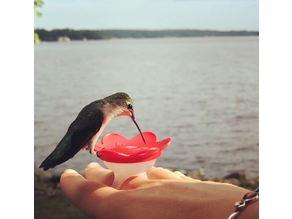 Hummingbird Feeding Ring