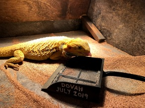 Lizard Sand Scooper