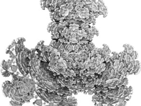 Fractal Tetra Bloom
