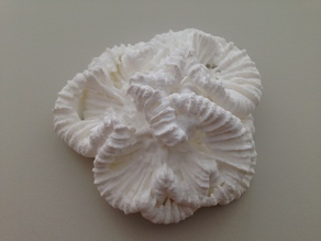 Trachyphillia Geoffroyi Coral