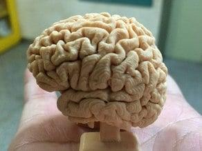 Walking brain
