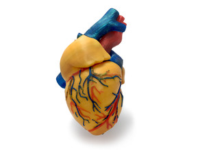 3 colors Anatomical Heart