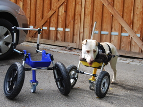 Dog wheelchair improved for twolegged dogs (front legs)