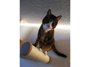 Wall mount for cats sisal scratch pole