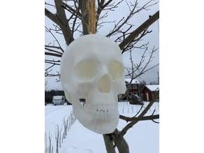 Skull Birdhouse