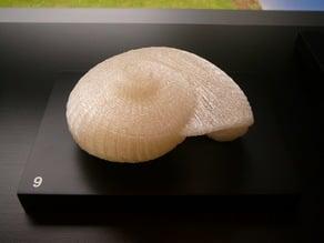 Giant snail shell